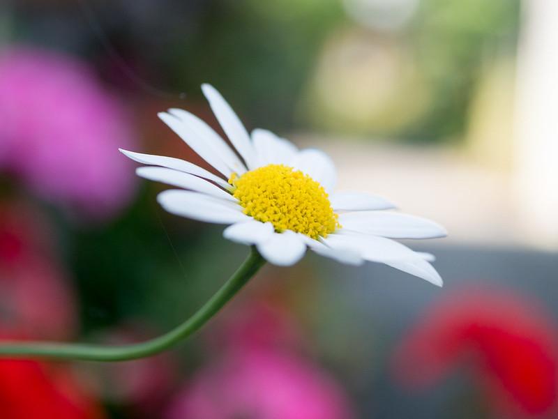 5月8日のお花