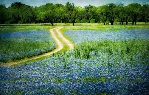 blue landscape spring texas unitedstates tx textures wildflowers hillcountry photoart bluebonnets marblefalls countryroads spicewood flypapertextures muleshoebendrecreationarea