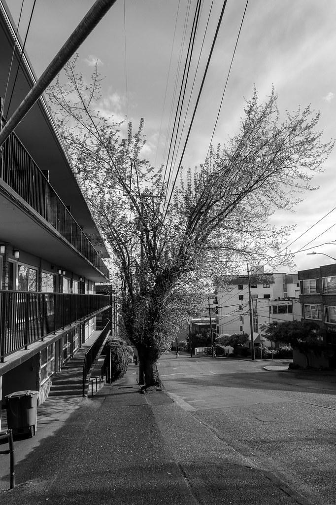 Seattle Trees 2015-3