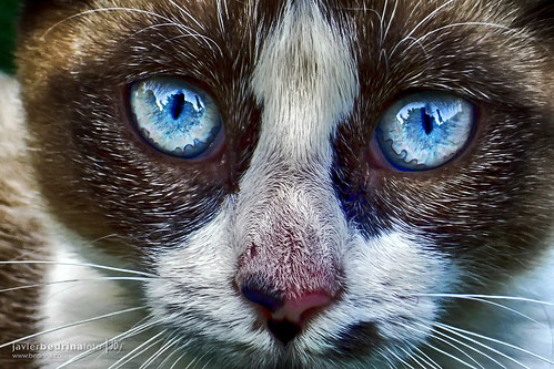 Cat Eyes | by @jbedrina