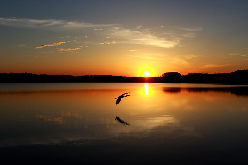 sunset heron reflections northcarolina partlycloudy