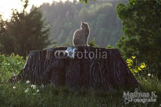 Katze in der Abendsonne