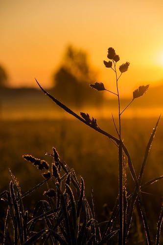 Morning light | by Infomastern