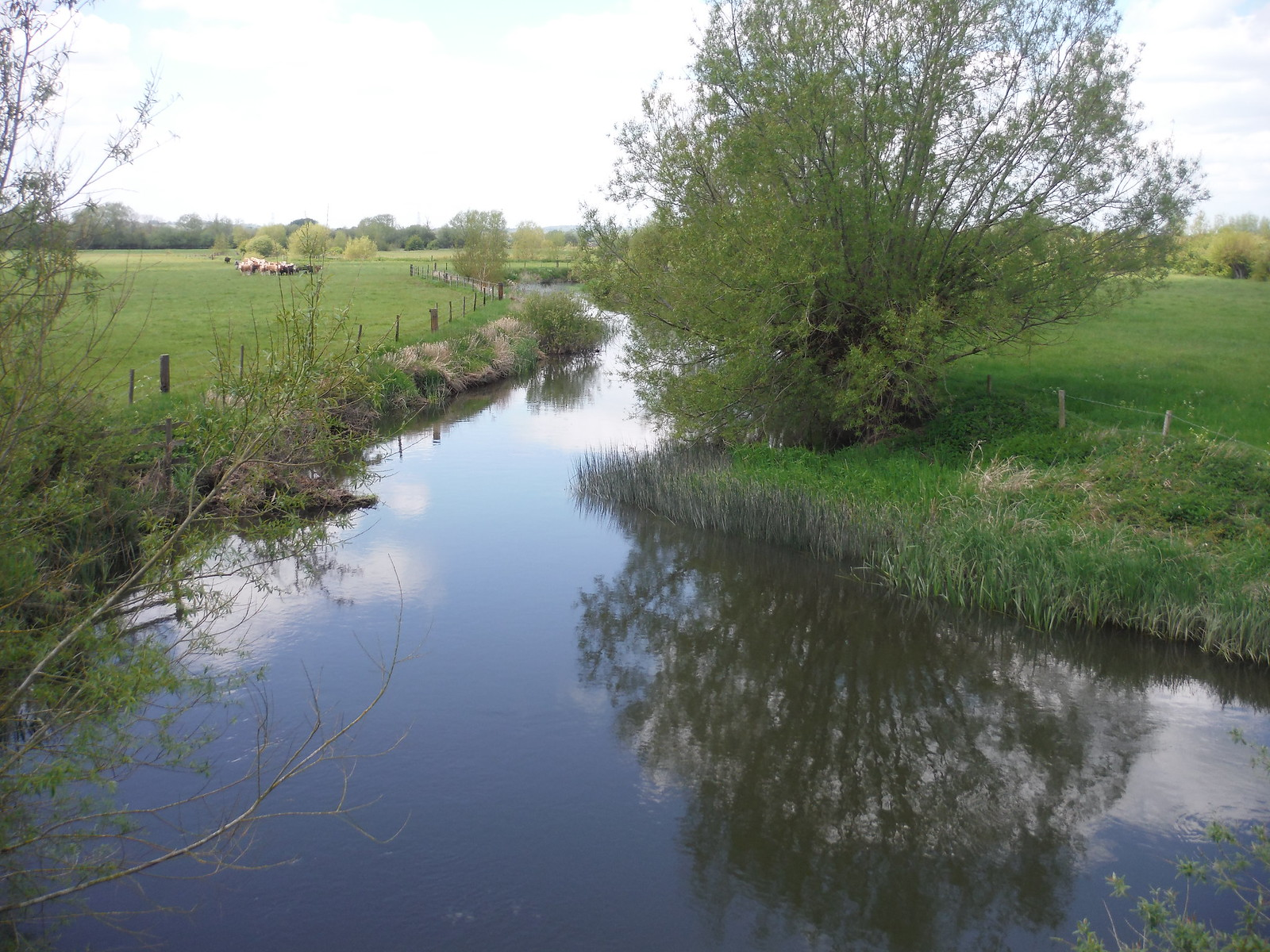 Thame River, from Ickford Bridge SWC Walk 190 - Thame Circular