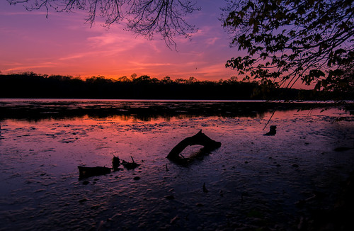 wowography wowographycom smithtown ny longisland suffolk smithtownbay sunset reflections 2015 lochnessmonster nessie creature shadows silhouette 2863280 trees night handheld nikon d610 1635mm driftwood nissequogueriver serpent sea blydenburghpark bird tomreese photography 500px