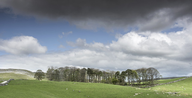 Trees and sky, Crummack Dale.