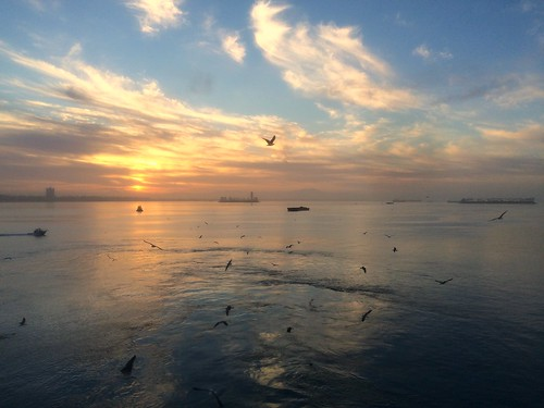 california sunrise harbor seagull longbeach iphone cruiseport