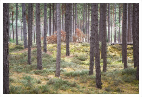 nature woodland scotland unitedkingdom fallen gb moray burghead roseisle