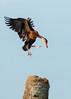 Treetop Landing by Bill McBride Photography