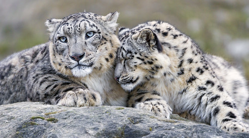 Okara loves her daddy! | by Tambako the Jaguar