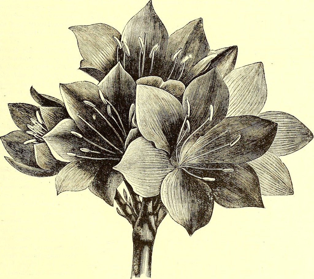 """Image from page 484 of """"The American garden"""" (1873)"""