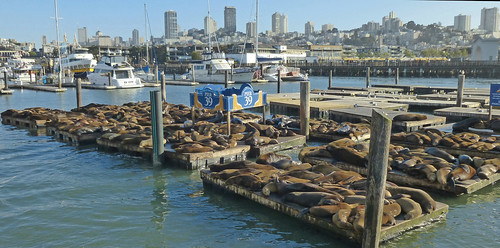 San Francisco's famous sea lions | by wessexman...(Mike)