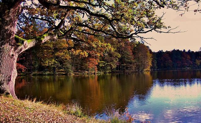 An autumn walk   two years ago at Bear Lake near Stuttgart,  trees, 73365/5854