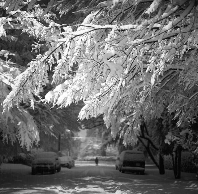 Snow, self
