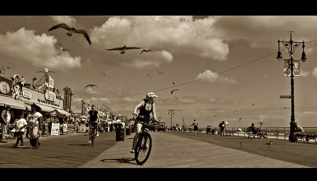 The Birds III : Coney Island