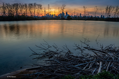 Cormorant nesting site silhouette and Toronto skyline sunset -  from Leslie Street Spit | by Phil Marion (184 million views - THANKS)