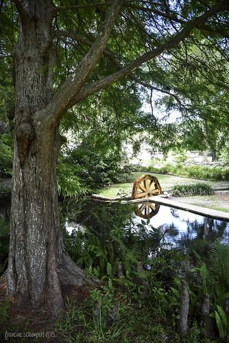 tree nature reflections landscape pond hiking palatkaflorida cypressroots floridastateparks nikond810 ravinegardensstatepark