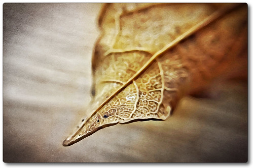 phototoaster picsart snapseed cortexcamera digitalart iphoneography iphone365 iphone coventry indoors depthoffield edge macromondays leaf macro photoborder