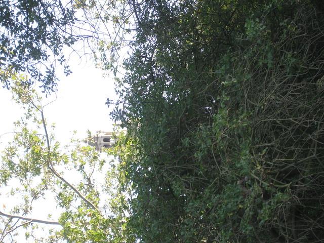 IMG_2710 st anthony from sbmnh thru trees