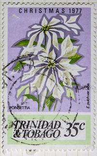 Poinsettia Christmas 1977 35cents