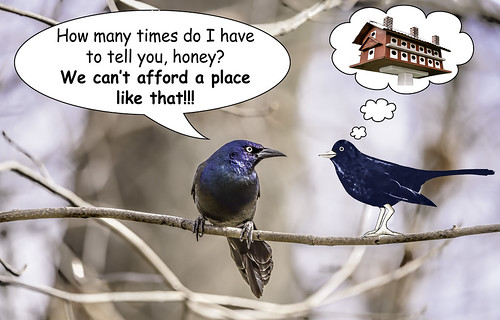 birds illinois thegrove wildlife text humor cartoons blackbirds composites birdhouses glenview hss speechbubbles thoughtbubbles sliderssunday tamron150600mm kreativepeopletreatthis