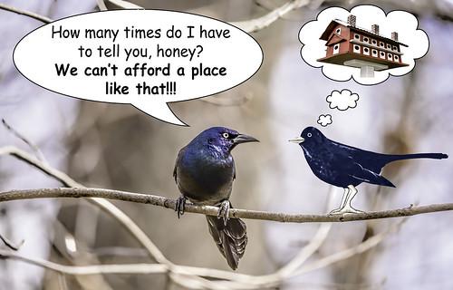 birds illinois thegrove wildlife text humor cartoons blackbirds composites birdhouses glenview hss speechbubbles thoughtbubbles sliderssunday tamron150600mm kreativepeopletreatthis