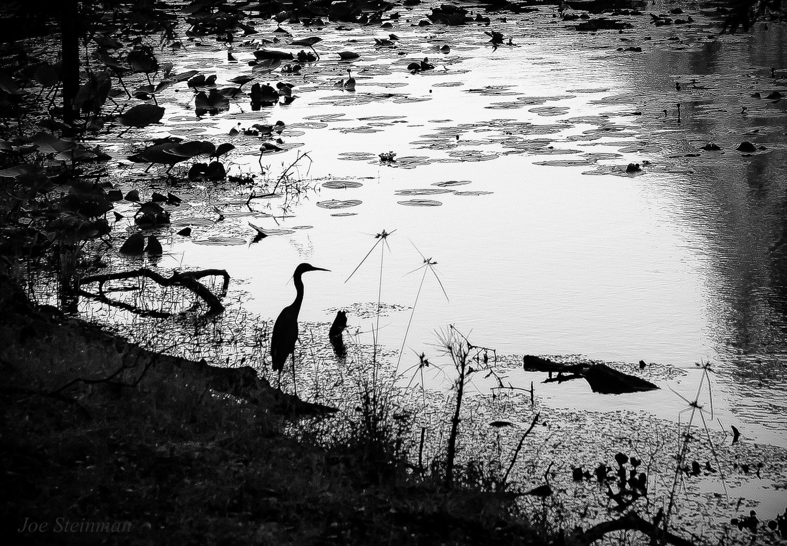 Magical Reflections: Monochrome Heron