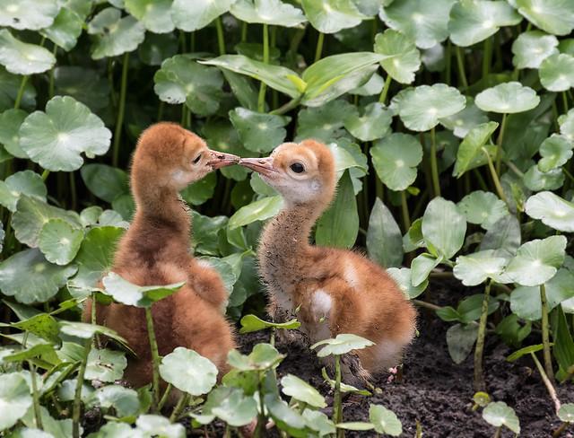 Siblings Kiss?