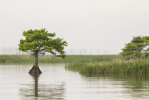 nature mobile landscape alabama boatride fiverivers