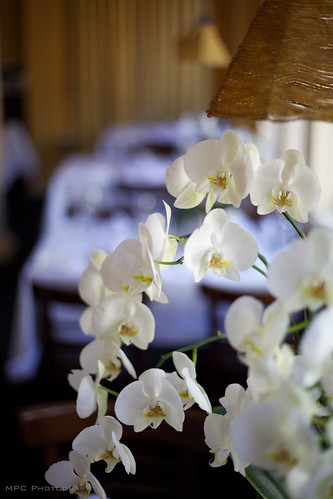 Dining Room Orchids | by cachecacheASE