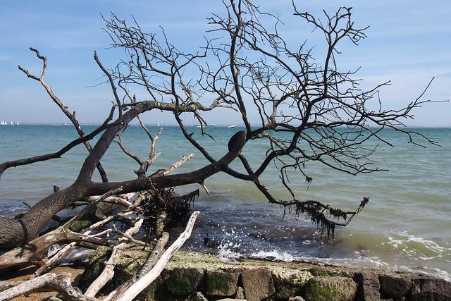 Osborne Beach
