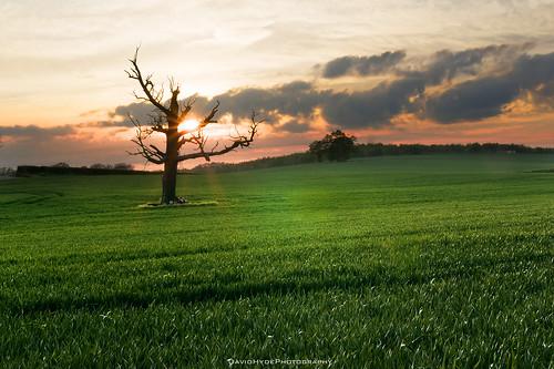 park sunset orange sun house tree grass silhouette clouds landscape dead countryside dusk farm sony meadow lensflare end crops marsh alpha essex saffronwalden audley a700 tamron1750 randomnonsense bydavehydephotography