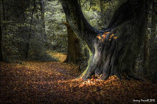 uk autumn trees light england southwest leaves woodland bristol woods october mood shadows magical lightshadow 2015 blaisecastleestate autumninbristol blaisecastleestatebristol nikond7100 photographybyjeremyfennell