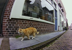 Alkmaar cat, May 2015