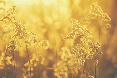 poland gras sun winter pentaxk3ii loneliness ☾