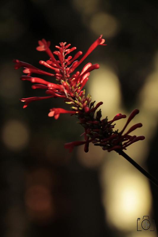 """Ensaio Abstrato """"Flor"""""""