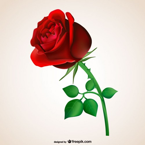 free romantic love red rose image download | by movieboke