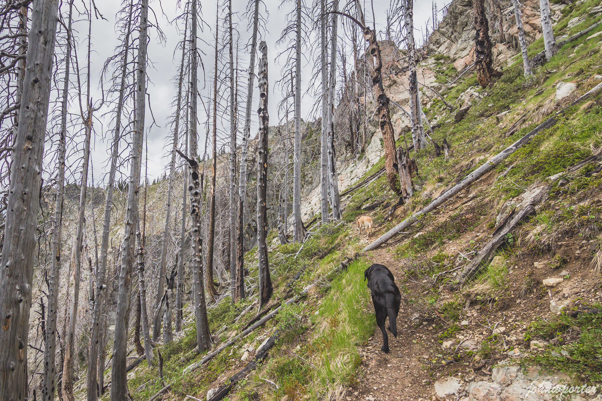 This way to Davis Peak