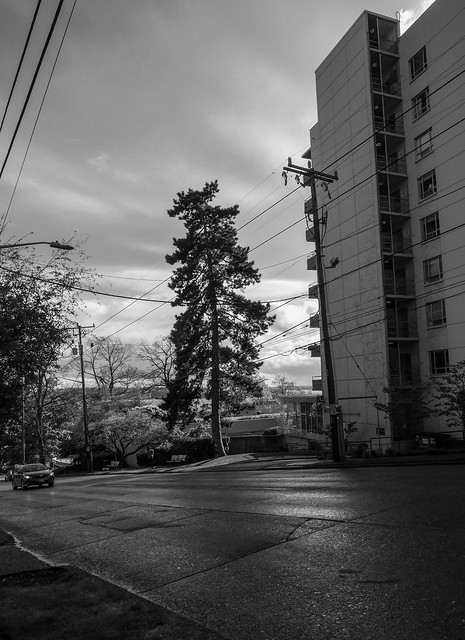 Seattle Trees 2015-4