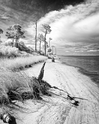 bw beach blackandwhite cloud cloudy florida grass ir infrared landscape monochrome panorama plant sky stjosephpeninsulastatepark tree usa water weather driftwood shore ©edrosack portstjoe edrosackcom
