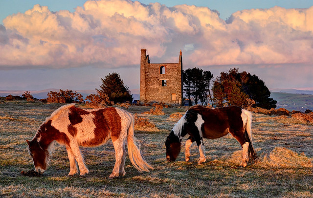 Grazing ponies on Bodmin Moor, Cornwall (Explored)