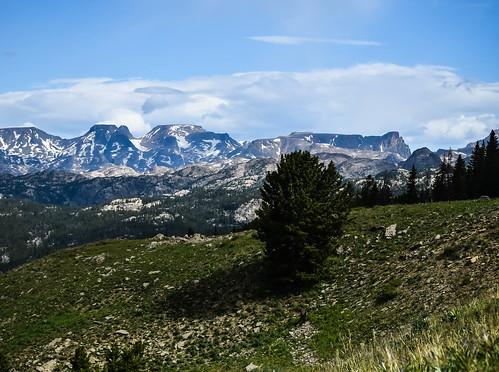 snow tree pine peak beartooth