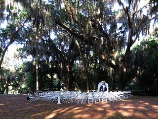 wedding | by magnificentfrigatebird