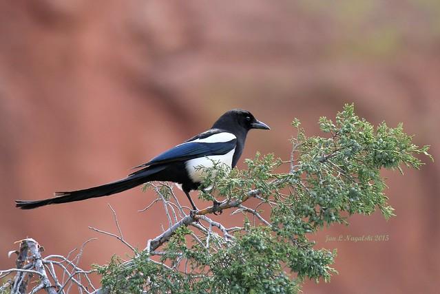 186. Flashy Bird