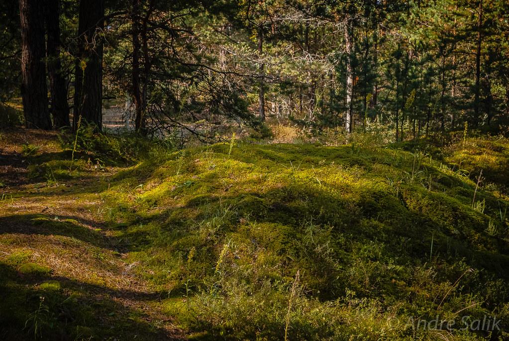 Lovely forest floor.  12:03:35 DSC_1911