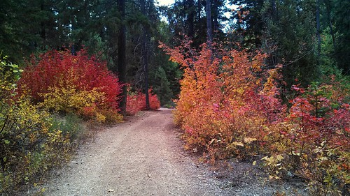 Fall underbrush | by Ace_E