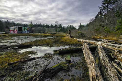 blakely bainbridge landscape forest driftwood water mill cement graffiti logs