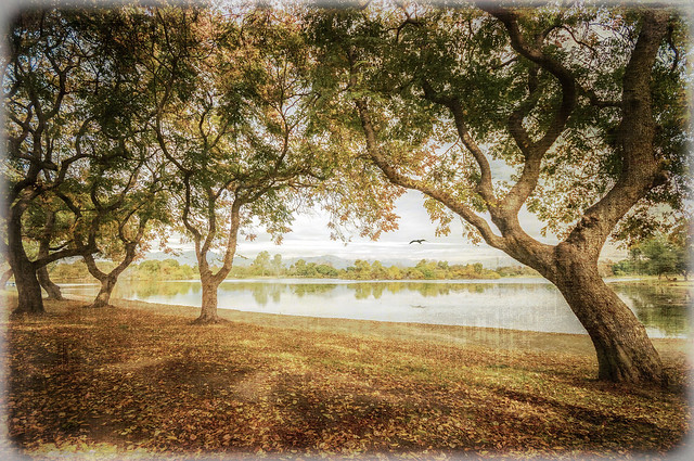 Serene Lake - Textured