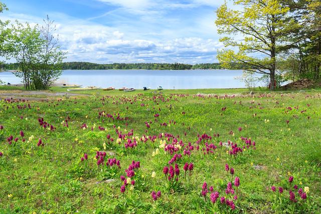 Beautiful Ängsö national park, Stockholm archipelago