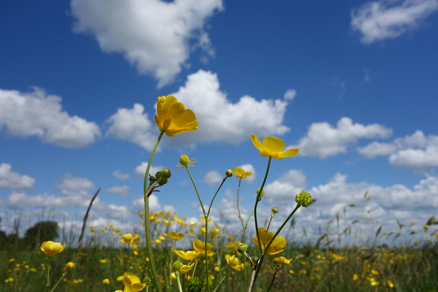 Dutch landscape with flowers